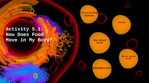 Activity 5.1: How Does Food Move in My Body? by Kara Griffith
