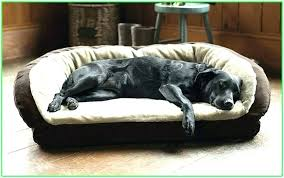 outdoor dog bed with canopy outdoor dog bed outdoor dog bed dog beds the best of bed and bath ideas hash dog outdoor dog bed outdoor raised dog bed
