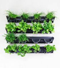 greenwall vertical gardening holman
