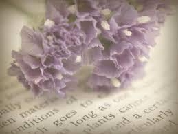 flowers texture nature fl purple lavender overlay romantic picnik purpleflowers oldbook layered oldtext softdreamyandethereal