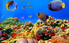 Download Gratis 5D Aquarium wallpaper ...