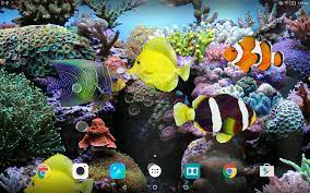 Fish Moving Live Wallpaper Hd Nature 3d ...