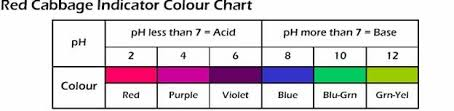 Red Cabbage Juice Indicator Chart Test Ph Levels With Red Cabbage Discovery Express