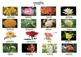 15 flowers name and images in hindi