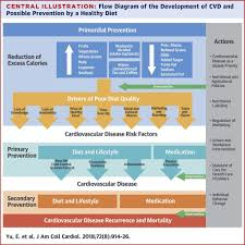 flow diagram of the development of cvd and possible prevention by a healthy t