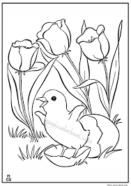 Springtime Coloring Pages At Getdrawingscom Free For Personal Use