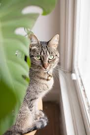 7 common houseplants that can make your pets quite sick