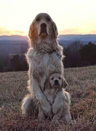 Pin de Priscilla Mills em Heart of Gold | Cães fofos, Cachorrinhos  fofinhos, Animais adoráveis