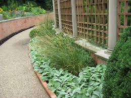 border 20mobot 20green and best plants for landscape edging