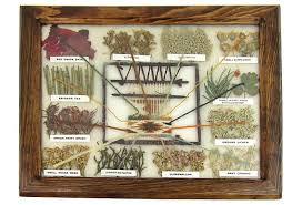 Navajo Dye Chart Framed Natural Dye Chart For Navajo Rugs On Onekingslane Com