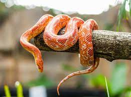 Quotations ▼ (ireland) somebody who acts deceitfully for social gain. World Snake Day 16th July Days Of The Year