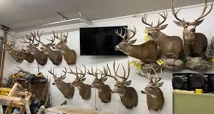 win a free deer head mount risovi
