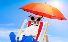 dog lounge chair trends also cool with sungl relaxing on under umbrella picture chaise outdoor chairdog