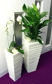 office plants for sale. Plain Plants Desk Indoor Plants Office Australia  For Sale London With Office Plants For Sale