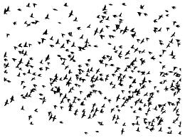 flock of birds clipart. Beautiful Clipart Huge Flock Of Birds Flying Silhouette 2 To Clipart