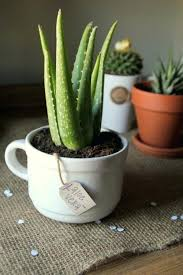 small plants for office. Small Office Plant The Best Plants For Your That Wont Die On Desk . Indoor