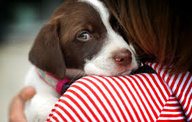 xây dựng lòng tin và gắn kết chó với bạn