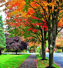 photo microsoft office redmond washington. Photo Of Fall Colors On Microsoft Campus, Redmond, WA Office Redmond Washington