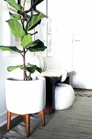 house plant stand houseplant with plant stand in the hallway dolls house plant stand