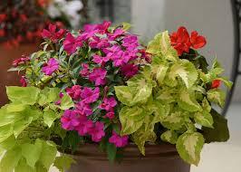 Plant A Shade GardenContainer Garden Ideas For Shade