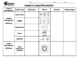 Asexual Reproduction Vs Sexual Reproduction Worksheets
