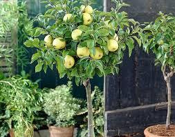 patio fruit pruning gardening