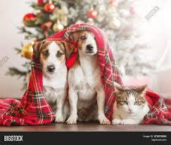 Cat Dog Near Christmas Image & Photo (Free Trial) | Bigstock