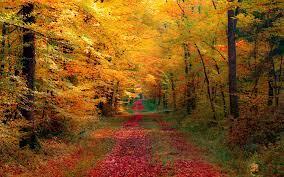 Fall Forest Wallpaper on WallpaperSafari