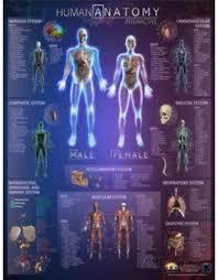 Wall Chart Of Human Anatomy Round World Human Anatomy Interactive Laminated Wall Chart