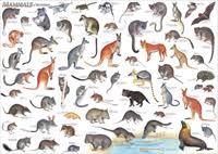 Mammals Chart Poster