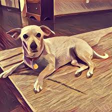 the prisma effect on a dog named jack
