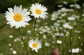 Beautiful White Flower Landscape