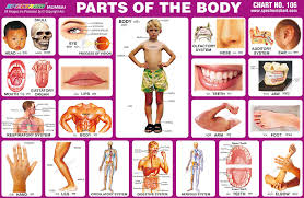 Spectrum Educational Charts Chart 106 Parts Of The Body