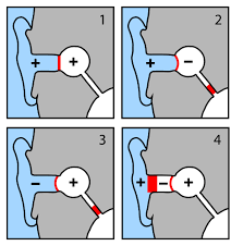 Taucherohren Tauchmedizin Tauchen Dokumente Niesch