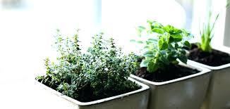 indoor herb garden diy indoor kitchen garden learn how to start an indoor herb garden indoor indoor herb garden diy