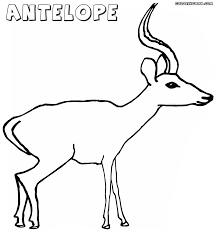 Small Picture Antelope coloring pages Coloring pages to download and print