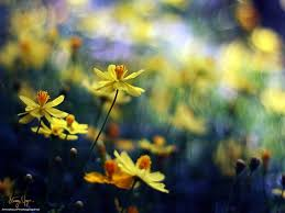 Yellow Tag Wallpapers Page 21 Yellow Flowers Green Love