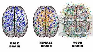female brain cartoons and comics funny pictures from cartoonstock female brain cartoon 2 of 8