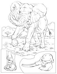 Small Picture 53 best Coloring pages to print Elephant images on Pinterest