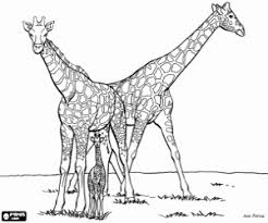 Kleurplaten Giraffen Kleurplaat
