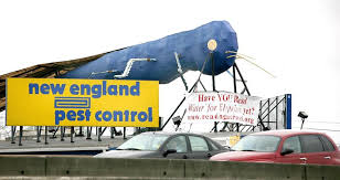 Big Blue Bug Solutions Rhode Islands Big Blue Bug Now Even Harder To Miss The Boston Globe