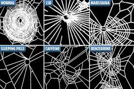 Image result for spider on meth
