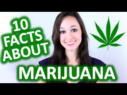 good facts on weed