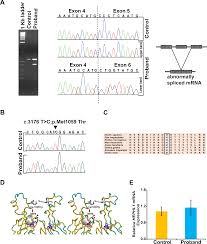 Biallelic Hephl1 Variants Impair Ferroxidase Activity And Cause An
