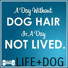 Life Quotable Quotes Quotable Quotes from LIFEDOG Life And Dog 95
