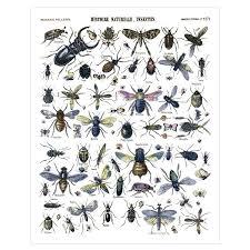 affiche insectes