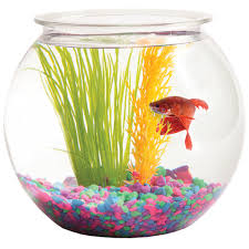 Hawkeye 1-Gallon Bubble-Shaped Fish Bowl, 8