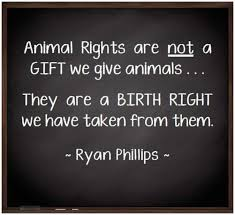 Animal Rights Quotes Magnificent Animal Research Quotes Best 48 Animal Rights Quotes Ideas On