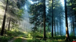 hd wallpapers nature forest. Brilliant Nature Related And Hd Wallpapers Nature Forest O