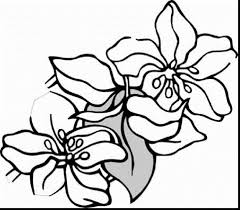 outstanding spring flower coloring pages with coloring pages ...